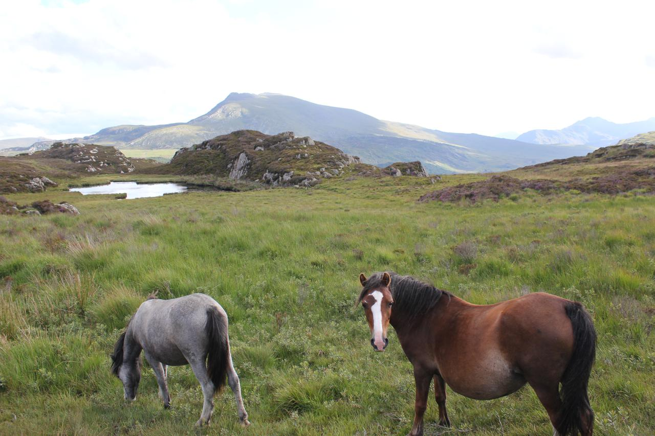 A couple of wild ponies wanted their photo taken!